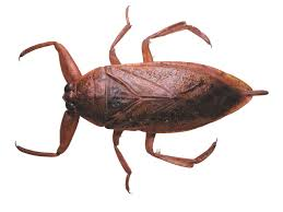 Bug contactformulier