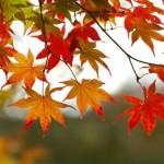 oktober herfst